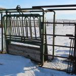 Picture: Cattle squeeze and Palp cage