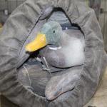 Duck Decoy's